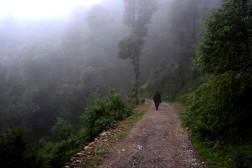 Walking to Naddi, the village beyond the mist