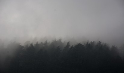 When clouds invade the fortress of trees