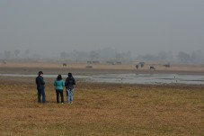 Birders and some cattle