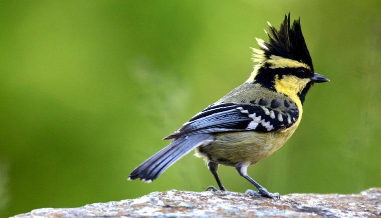 What a lovely little bird