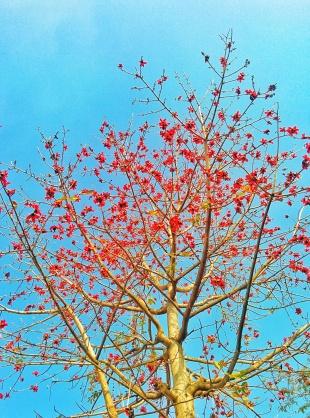 A springtime bloom