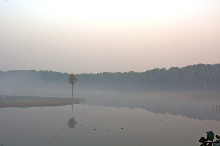 A lone palm tree stands guard as the veil of fog lifts ever so slowly off the waters