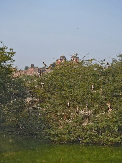 The heronry at Delhi zoo, against the backdrop of the Purana Qila